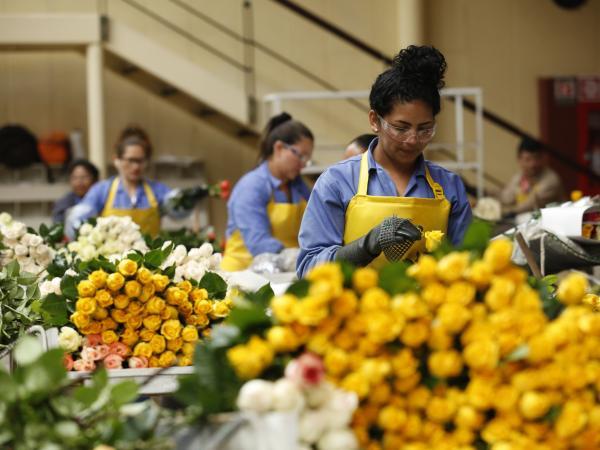 Expectativa de floricultores ante inusual Día de la Madre