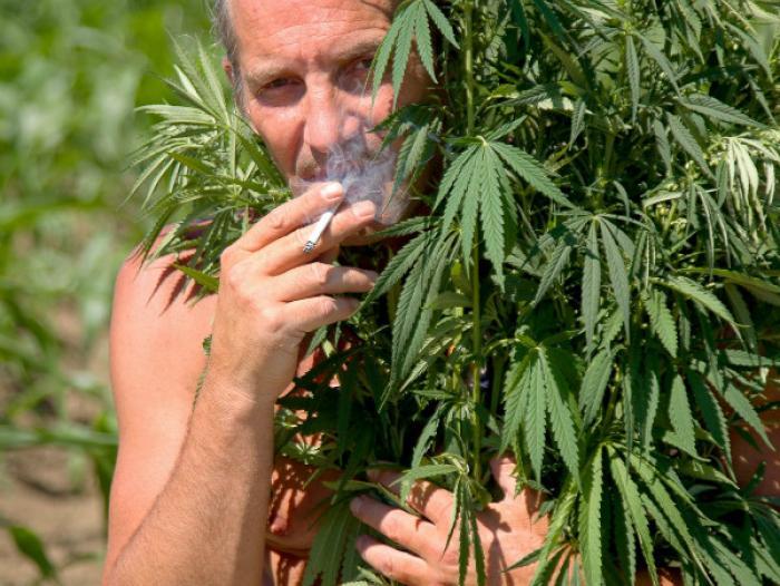 Курение марихуаны плюс сколько дней конопля выводится из организма