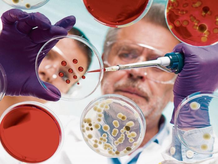 Tinta Viva Permite La Impresión 3d De órganos Humanos Innovación