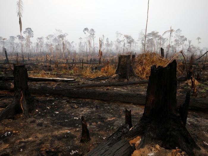 Radiografía económica de la destrucción amazónica por el