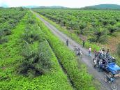 Los palmicultores y la siembra de un nuevo país