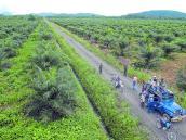 ¿Cómo evitar que cultivos en Colombia esterilicen las tierras?